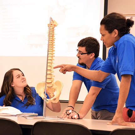 Students looking at a model of a human spine.